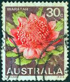 """Australia - około 1968: znaczek wydrukowany w australii od """"stanu kwiatowymi emblematami"""" problem pokazuje waratah (nowej południowej walii), około 1968. — Zdjęcie stockowe"""