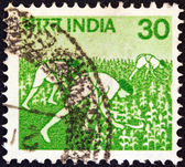 INDIA - CIRCA 1979: A stamp printed in India shows maize harvesting, circa 1979. — Foto Stock
