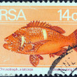 Stock Photo: SOUTH AFRIC- CIRC1974: stamp printed in South Africshows Romseabream (Chrysoblephus laticeps) fish, circ1974.