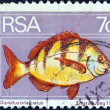 SOUTH AFRICA - CIRCA 1974: A stamp printed in South Africa shows a Zebra seabream (Diplodus trifasciatus) fish, circa 1974. - Stock Photo