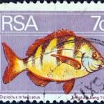 SOUTH AFRICA - CIRCA 1974: A stamp printed in South Africa shows a Zebra seabream (Diplodus trifasciatus) fish, circa 1974. — Stock Photo