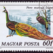 "Stock Photo: HUNGARY - CIRC1977: stamp printed in Hungary from ""birds"" issue shows green Peacock, circ1977."