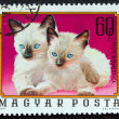 "HUNGARY - CIRC1974: stamp printed in Hungary from ""Young animals"" issue shows two Siamese kittens, circ1974. — Stock Photo #16163461"