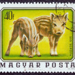 "HUNGARY - CIRCA 1976: A stamp printed in Hungary from the ""Young animals"" issue shows two young wild boars, circa 1976. - Stock Photo"