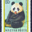 "HUNGARY - CIRCA 1977: A stamp printed in Hungary from the ""Bears"" issue shows a Giant Panda, circa 1977. — Lizenzfreies Foto"