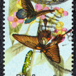 "MALAYSIA - CIRCA 1970: A stamp printed in Malaysia from the ""National"" issue shows Papilio memnon agenor butterflies, circa 1970. — Stock Photo"