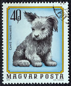 """HUNGARY - CIRCA 1974: A stamp printed in Hungary from the """"Young animals"""" issue shows a dog puppy, circa 1974. — Stock Photo"""