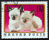 "HUNGARY - CIRCA 1974: A stamp printed in Hungary from the ""Young animals"" issue shows two Siamese kittens, circa 1974. — Stock Photo"