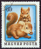 """HUNGARY - CIRCA 1976: A stamp printed in Hungary from the """"Young animals"""" issue shows two young squirrels, circa 1976. — Stock Photo"""