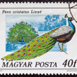 "HUNGARY - CIRCA 1977: A stamp printed in Hungary from the ""birds"" issue shows a Peacock, circa 1977. — Stock Photo"