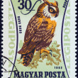 "HUNGARY - CIRCA 1962: A stamp printed in Hungary from the ""Birds of Prey"" issue shows an Eagle owl (Bubo bubo), circa 1962. - Stock Photo"