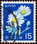 JAPAN - CIRCA 1966: A stamp printed in Japan shows Chrysanthemums, circa 1966. — Stock Photo