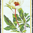"GREECE - CIRCA 1978: A stamp printed in Greece from the ""Greek flora"" issue shows a Paeonia rhodia flower, circa 1978. — Foto de Stock"
