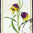 "Stock Photo: GREECE - CIRC1978: stamp printed in Greece from ""Greek flora"" issue shows Fritillarirhodocanakis flower, circ1978."
