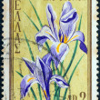 "GREECE - CIRCA 1958: A stamp printed in Greece from ""International Congress for Protection of Nature, Athens"" issue shows Iris cretica, circa 1958. — Stock Photo"