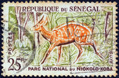 """SENEGAL - CIRCA 1960: A stamp printed in Senegal from the """"Niokolo-Koba National Park"""" issue shows a Bushbuck, circa 1960. — Stock Photo"""