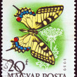 HUNGARY - CIRCA 1959: A stamp printed in Hungary from the Butterflies and Moths issue, shows a Swallowtail butterfly, circa 1959.  — Foto de Stock