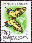 """Hungría - circa 1959: un sello impreso en hungría de la cuestión """"mariposas y polillas"""", muestra una mariposa de swallowtail, circa 1959. — Foto de Stock"""