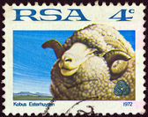 "SOUTH AFRICA - CIRCA 1972: A stamp printed in South Africa from the ""Sheep and Wool Industry"" issue shows a sheep, circa 1972. — Foto de Stock"