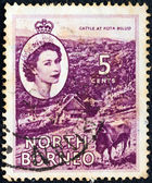 NORTH BORNEO - CIRCA 1954: A stamp printed in North Borneo shows Cattle at Kota Belud and portrait of Queen Elizabeth II, circa 1954. — Stock Photo