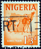 NIGERIA - CIRCA 1961: A stamp printed in Nigeria shows Camel train, circa 1961. — Stock Photo