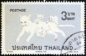 """THAILAND - CIRCA 1970: A stamp printed in Thailand from the """"Siamese cats"""" issue shows Pure white Siamese cats, circa 1970. — Stock Photo"""