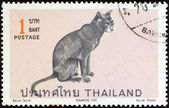 """THAILAND - CIRCA 1970: A stamp printed in Thailand from the """"Siamese cats"""" issue shows Blue point Siamese cat, circa 1970. — Stock Photo"""