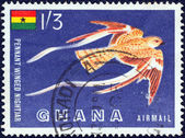 GHANA - CIRCA 1959: A stamp printed in Ghana shows a Pennant-winged nightjar (Macrodipteryx vexillarius) bird, circa 1959. — Stockfoto