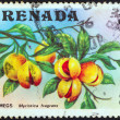 GRENADA - CIRCA 1974: A stamp printed in Grenada shows a nutmeg branch (Myristica fragrans), circa 1974. - Stockfoto