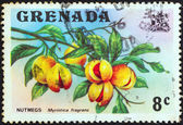 GRENADA - CIRCA 1974: A stamp printed in Grenada shows a nutmeg branch (Myristica fragrans), circa 1974. — Stock Photo