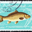 "ROMANIA - CIRCA 1960: A stamp printed in Romania from the ""Fishes"" issue shows a Common carp (Cyprinus carpio), circa 1960. — Stock Photo"