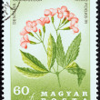 "HUNGARY - CIRCA 1967: A stamp printed in Hungary from the ""151st Death anniversary of Pal Kitaibel (botanist). Carpathian Flowers"" issue shows Dentaria glandulosa flower, circa 1967. — Stock Photo"