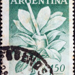 "ARGENTINA - CIRCA 1957: A stamp printed in Argentina from the ""New Provinces"" issue shows Mate tea plant, Misiones, circa 1957. — Stock Photo"