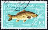 "ROMANIA - CIRCA 1960: A stamp printed in Romania from the ""Fishes"" issue shows a Common carp (Cyprinus carpio), circa 1960. — Стоковое фото"