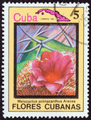 """CUBA - CIRCA 1983: A stamp printed in Cuba from the """"Cuban flowers"""" issue shows Melocactus actinacanthus Areces, circa 1983. — Stock Photo"""