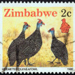 "ZIMBABWE - CIRC1990: stamp printed in Zimbabwe from ""Wildlife"" issue shows Helmeted guineafowl, circ1990. — Stock Photo #25887851"