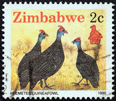 "ZIMBABWE - CIRCA 1990: A stamp printed in Zimbabwe from the ""Wildlife"" issue shows Helmeted guineafowl, circa 1990. — Stock Photo"