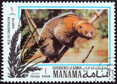 "MANAMA DEPENDENCY - CIRCA 1971: A stamp printed in United Arab Emirates from the ""Wildlife conservation"" issue shows a Potto (Perodicticus potto), circa 1971. — Stock Photo"