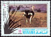 "MANAMA DEPENDENCY - CIRCA 1971: A stamp printed in United Arab Emirates from the ""Wildlife conservation"" issue shows a Ostrich (Struthio camelus), circa 1971. — Stock Photo"