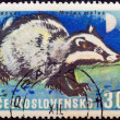 "CZECHOSLOVAKIA - CIRCA 1966: A stamp printed in Czechoslovakia from the ""Game Animals"" issue shows a Eurasian badger (Meles meles), circa 1966. — Stock Photo"