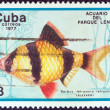 "CUBA - CIRCA 1977: A stamp printed in Cuba from the ""Fish in Lenin Park Aquarium, Havana"" issue shows a Tiger barb fish (Barbus tetrazona), circa 1977. — Stock Photo"