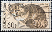 "CZECHOSLOVAKIA - CIRCA 1967: A stamp printed in Czechoslovakia from the ""Fauna of Tatra National Park"" issue shows a Wildcat (Felis silvestris), circa 1967. — Stock Photo"
