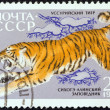 USSR - CIRCA 1970: A stamp printed in USSR from the Fauna of Sikhote-Alin Nature Reserve issue shows a Siberian tiger, circa 1970.  — Stock Photo
