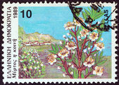 "GREECE - CIRCA 1989: A stamp printed in Greece from the ""Wild Flowers"" issue shows common myrtle (Myrtus communis), circa 1989. — Stock Photo"