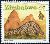 """Zimbabve - 1990 yaklaşık: Zimbabve gelen """"vahşi"""" konu basılmış damga 1990 dolaylarında bir pangolin gösterir. — Stok fotoğraf"""