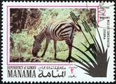 "MANAMA DEPENDENCY - CIRCA 1971: A stamp printed in United Arab Emirates from the ""Wildlife conservation"" issue shows a zebra, circa 1971. — Stock Photo"
