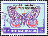 """DUBAI EMIRATE - CIRCA 1963: A stamp printed in United Arab Emirates from the """"Centenary of Red Cross"""" issue shows March moth, circa 1963. — Stock Photo"""