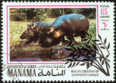 "MANAMA DEPENDENCY - CIRCA 1971: A stamp printed in United Arab Emirates from the ""Wildlife conservation"" issue shows Hippopotamus, circa 1971. — Stock Photo"