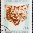 "HUNGARY - CIRC1966: stamp printed in Hungary from ""Hunting Trophies"" issue shows wildcat (Felis silvestris), circ1966. — Stock Photo #27369959"