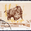 "HUNGARY - CIRCA 1964: A stamp printed in Hungary from the ""Hunting"" issue shows a Wild boar (Sus scrofa) and shotgun, circa 1964. — Stock Photo"